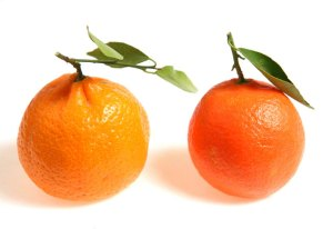 two-oranges-636
